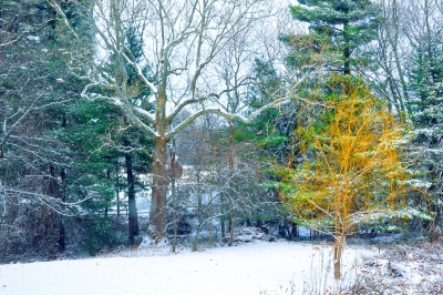 Snow And Color