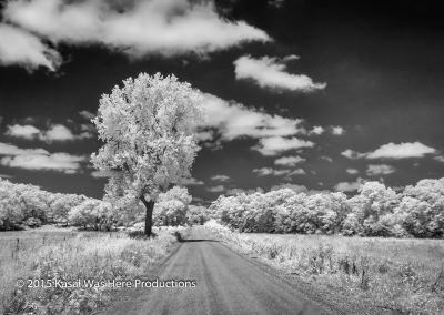Infrared Black And White