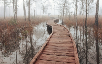 Foggy Flooded Flatwoods