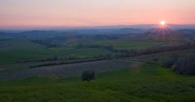 Rising Sun Over Tuscan Vineyards