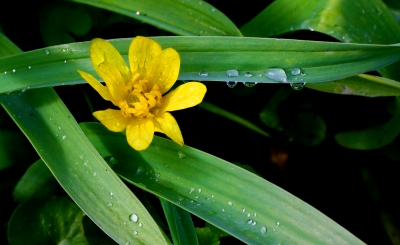 Bloom And Water Drops