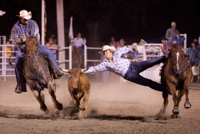 Steer Wrestling Not Going To Happen