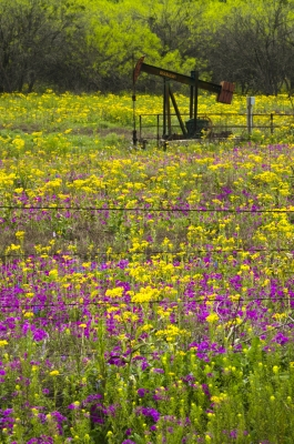 Wild Flowers Of Texas