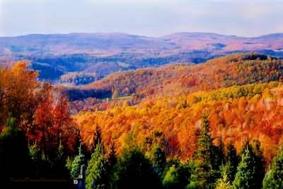 Fall Covering The Pennsylvania Laurel Mountains