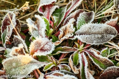 Morning Frost