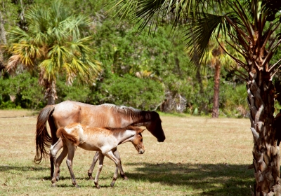 Wild Horse And New Colt