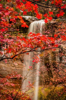 Waterfall Through Maples