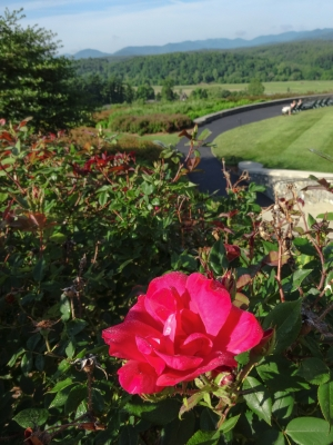 Flower And The Blue Ridge Mountains