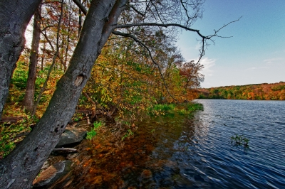 Fall, Trees, Trunks, Reseroir, Water, Sky Hdr