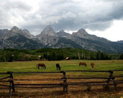 Grazing At Grand Tetons