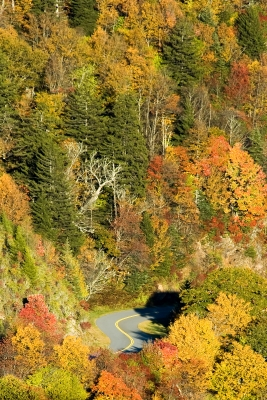 Curvy Moutain Road In The Fall