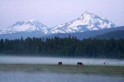 Horses Through The Mist
