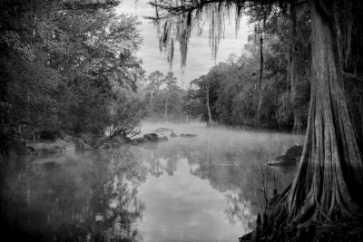 Withlacoochee River Landscape #30