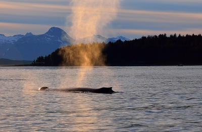 Humpback On The Move