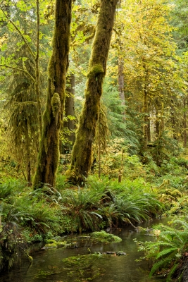 In The Hoh Rainforest