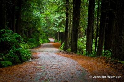The Road To Fern Canyon