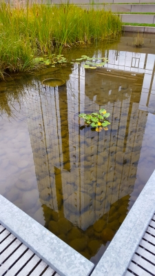 Urban Nature Pond – Reflection Or Illusion?