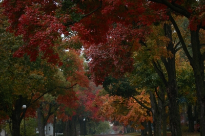 City Of Beautiful Maples