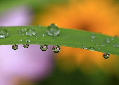 Flowers In Raindrops