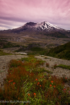 Mount St. Helens, Sunset And Wildflowers