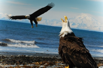 American Eagles Go To The Beach