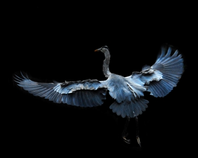 Blue Heron – Landing Approach