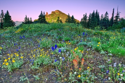 Wildflowers At Dawn