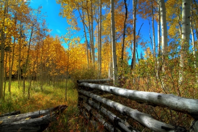 Autumn At Dixieland National Forest