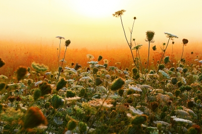 Weeds In Fog