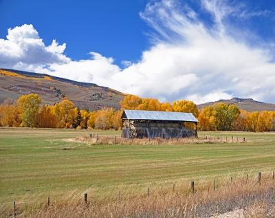 Aspens And Hay Bales