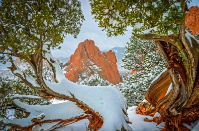 Gateway Rock And Snow Covered Juniper In Garden Of The Gods