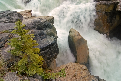 Sunwapta Falls Flowing Forcefully!