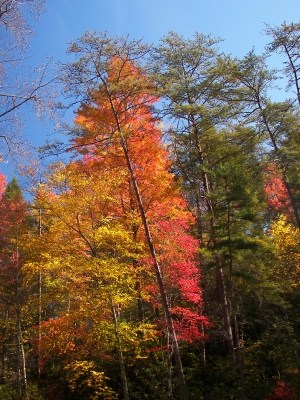 Cherokee Fall Colors