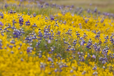 Table Mountain Wildflowers