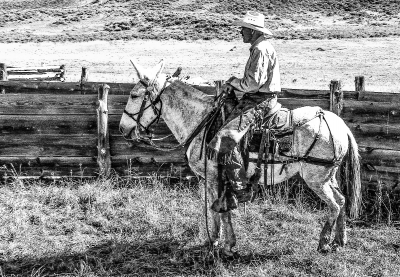 Another Day On The Ranch
