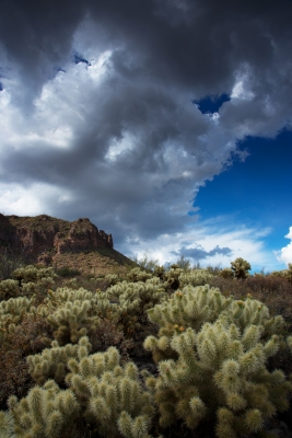 Storm Clouds And Cholla.