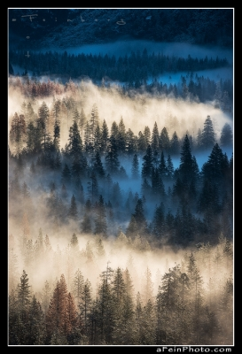 Untitled Yosemite Fog