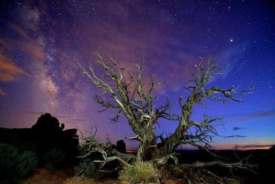 Tree In Arches