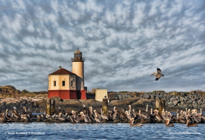Pelicans At The Lighthouse