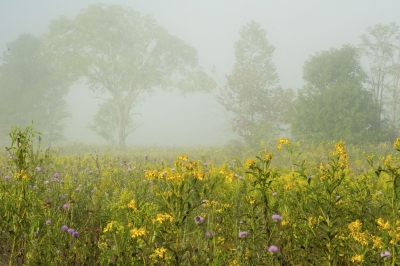 A Foggy Day In The Great Smoky Mountains