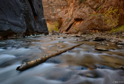 Standing Strong In The Zion Narrows
