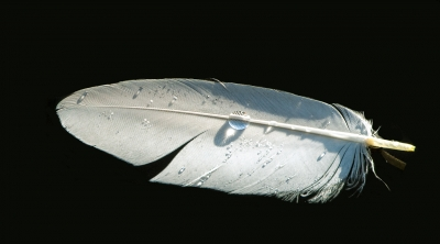 Feather & Droplet