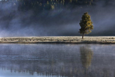 Lone Tree In The Morning Mist