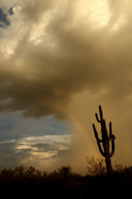 Saguaro Silhouette And Rainbow.