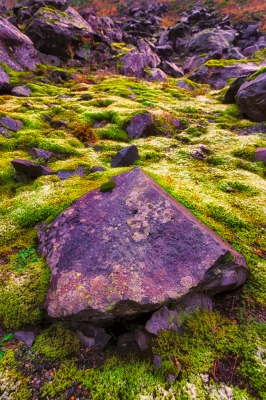 Rock And Moss Garden, Snoqualmie Pass, Washington