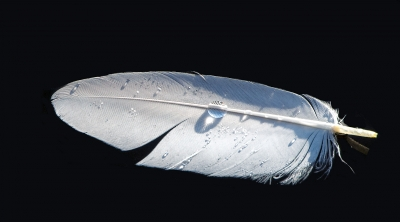 Feather And Droplet