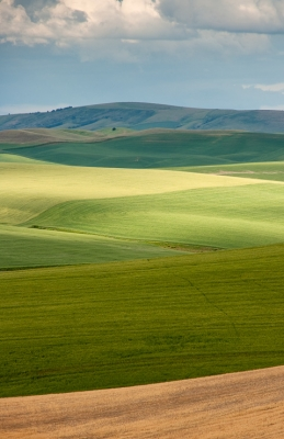 Plains Of Palouse