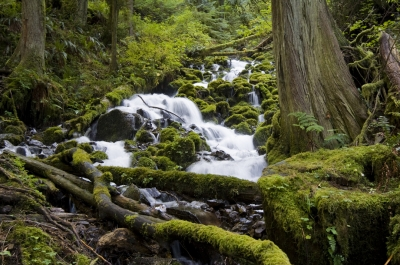 Columbia Gorge Rainforest