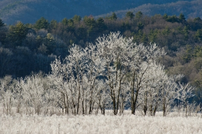 A Light Frost Covers The Trees And Land In Cades Cove.
