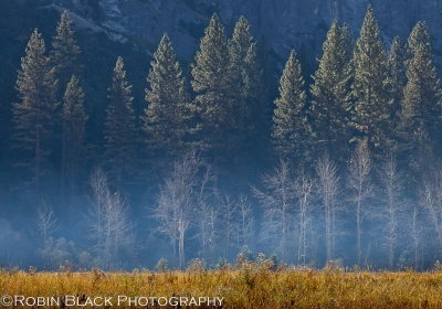 First Light On El Capitan Meadow